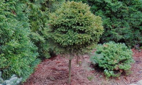 Prodej stromků Jihlava